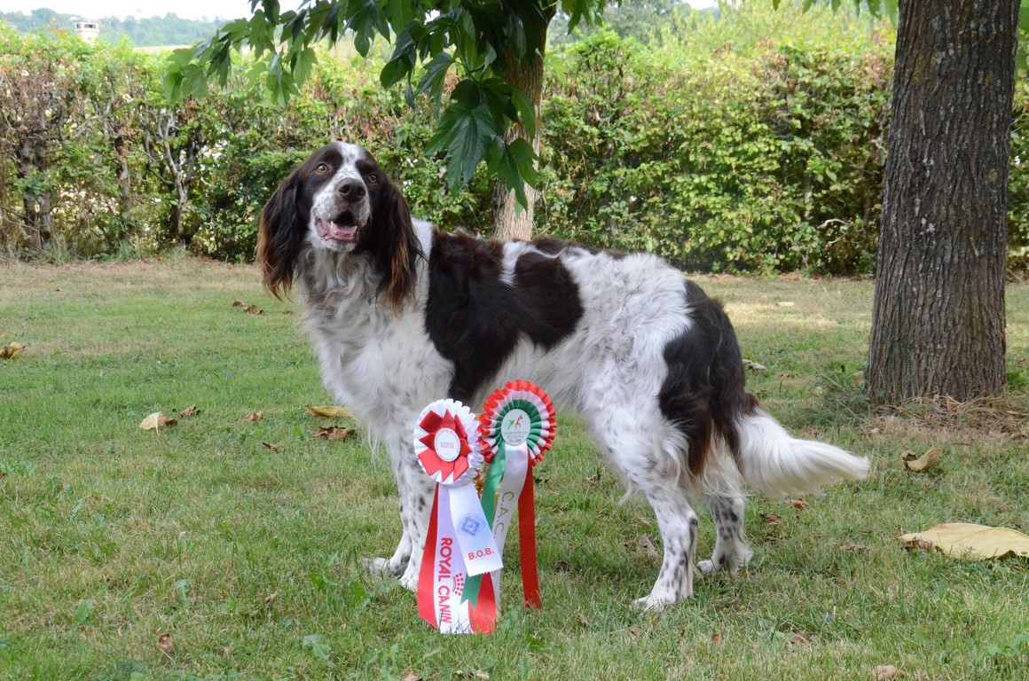 Douky champion d italie (1)